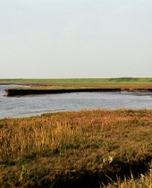 Foto taget ind mod det nye dige, der ligger tilbagetrukket i forhold til det gamle, gennembrudte dige øst for Juvre på den nordlige del af Rømø. Man kan her se den tydelige erosionskant i marsken. Foto: Merete Binderup, 2003