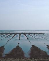 Grøblerender i saltvandssøen set fra dige. Foto: Peter Friis Møller, 2003