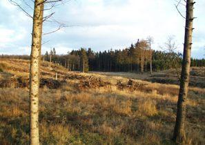Kelstrup Plantage. Foto: H.J. Granat